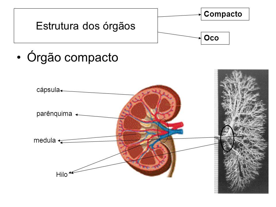 Órgão compacto Estrutura dos órgãos Compacto Oco cápsula parênquima