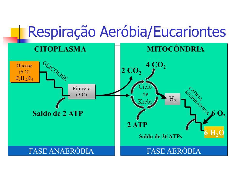 Respiração Aeróbia/Eucariontes