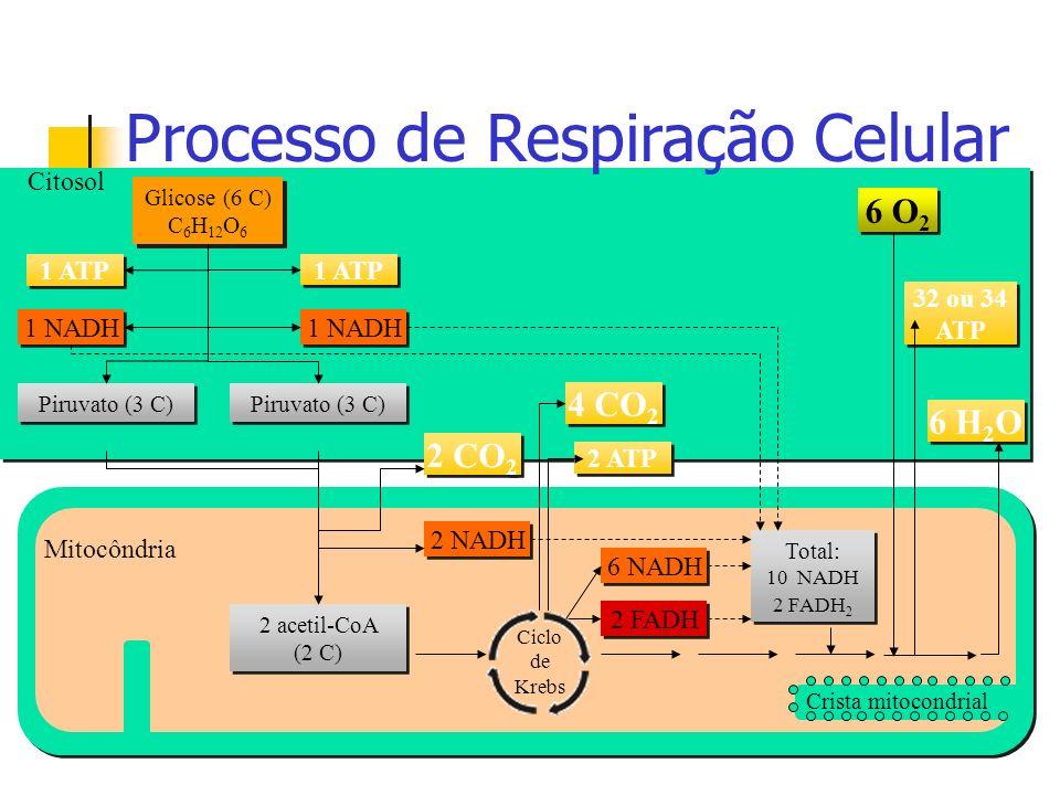 Processo de Respiração Celular