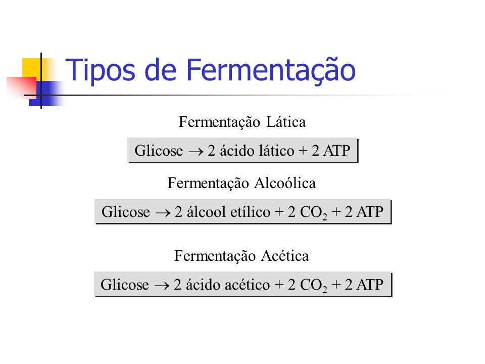 Tipos de Fermentação Fermentação Lática