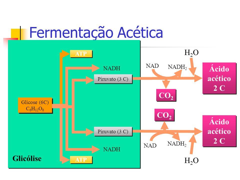 Fermentação Acética CO2 Ácido acético 2 C Glicólise H2O NADH2 NAD NADH