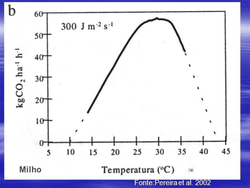 Milho Fonte:Pereira et al. 2002