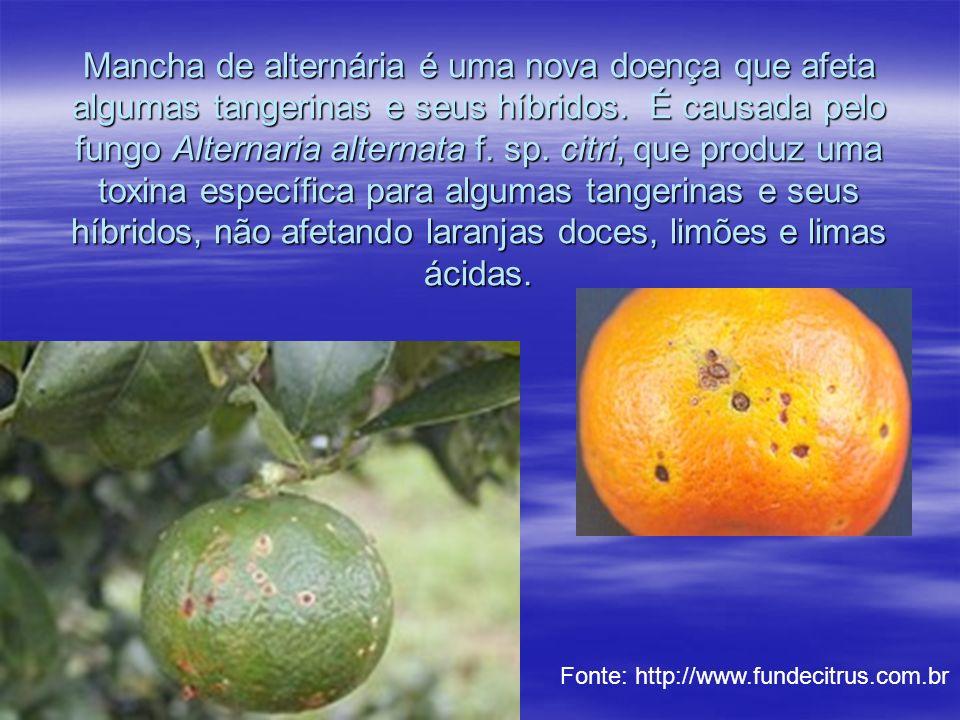 Mancha de alternária é uma nova doença que afeta algumas tangerinas e seus híbridos. É causada pelo fungo Alternaria alternata f. sp. citri, que produz uma toxina específica para algumas tangerinas e seus híbridos, não afetando laranjas doces, limões e limas ácidas.