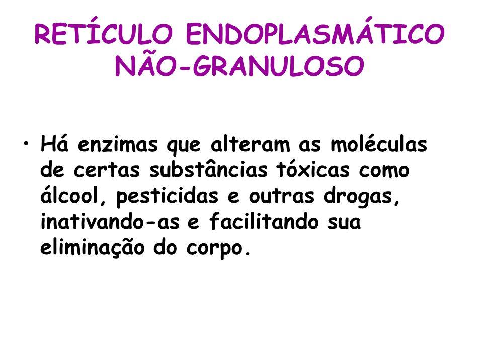 RETÍCULO ENDOPLASMÁTICO NÃO-GRANULOSO