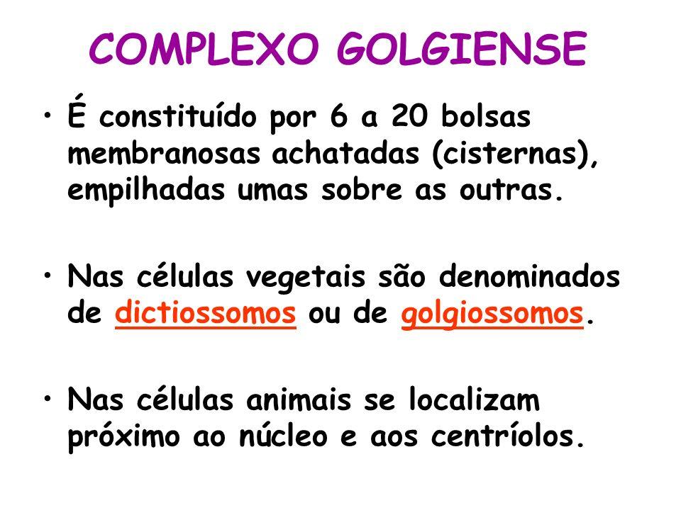 COMPLEXO GOLGIENSE É constituído por 6 a 20 bolsas membranosas achatadas (cisternas), empilhadas umas sobre as outras.