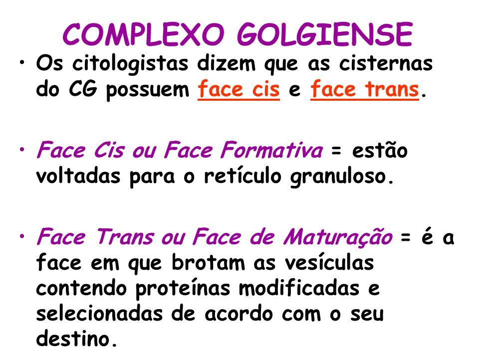 COMPLEXO GOLGIENSE Os citologistas dizem que as cisternas do CG possuem face cis e face trans.