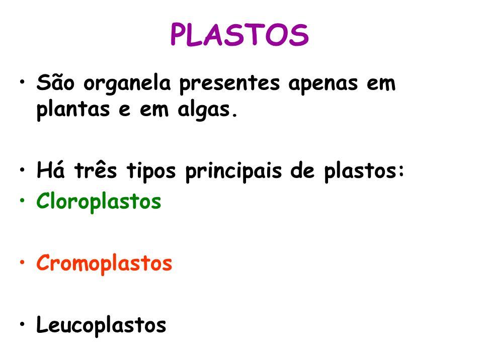 PLASTOS São organela presentes apenas em plantas e em algas.