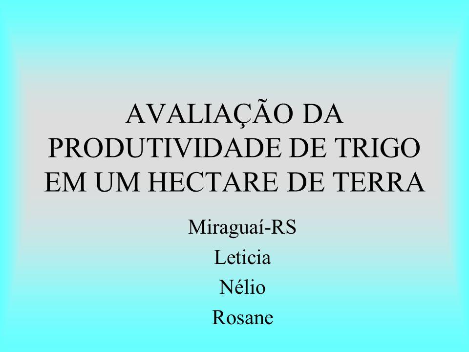 AVALIAÇÃO DA PRODUTIVIDADE DE TRIGO EM UM HECTARE DE TERRA
