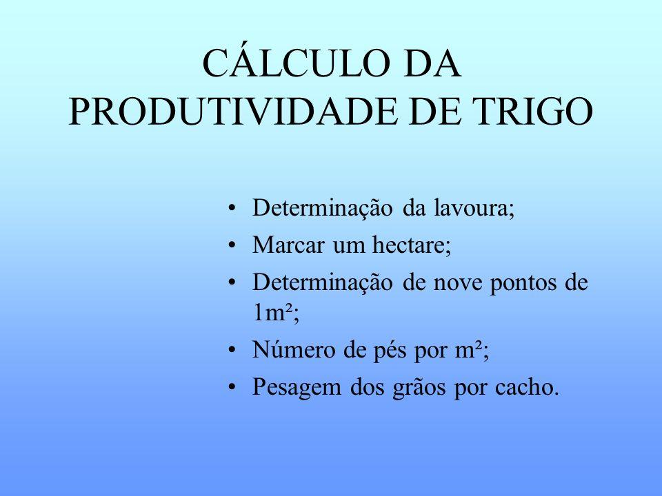 CÁLCULO DA PRODUTIVIDADE DE TRIGO