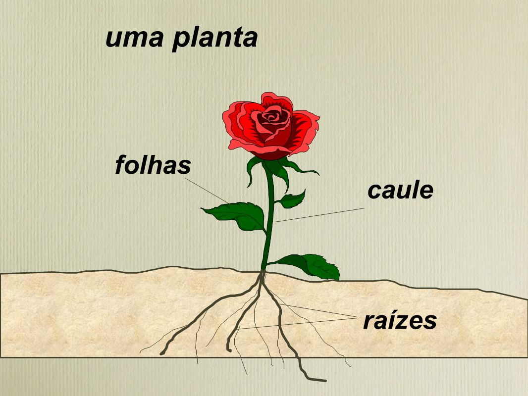 uma planta folhas caule raízes