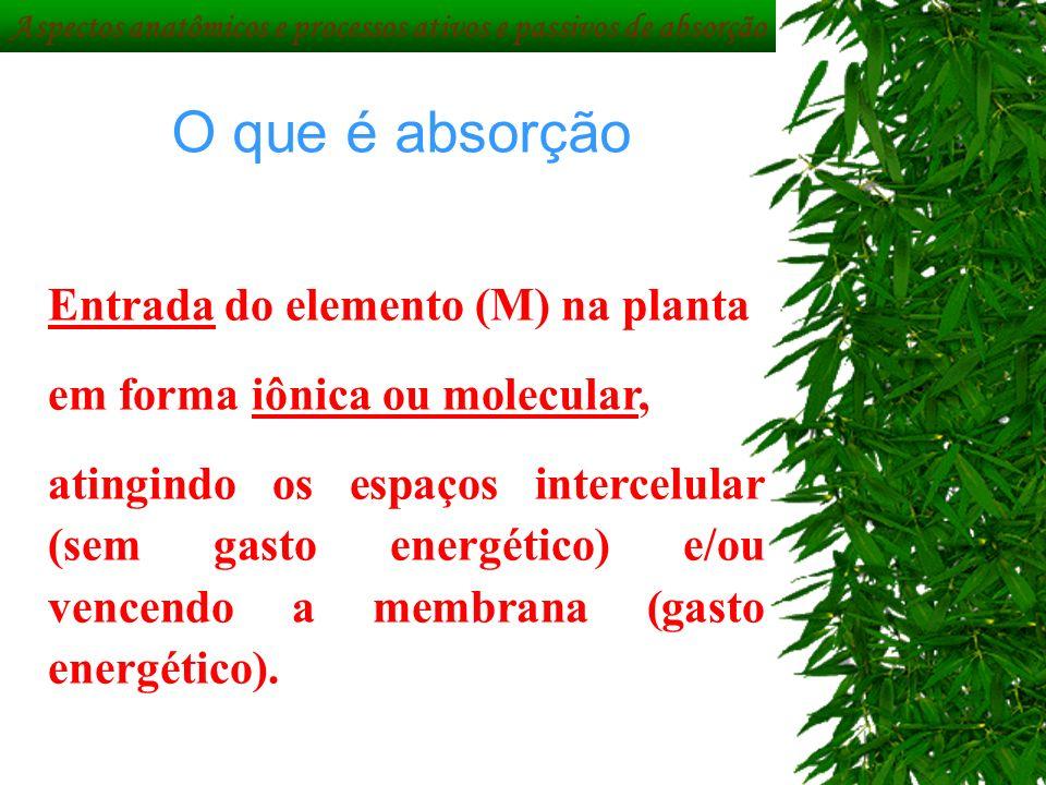 O que é absorção Entrada do elemento (M) na planta