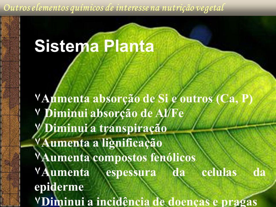 Sistema Planta ۷Aumenta absorção de Si e outros (Ca, P)