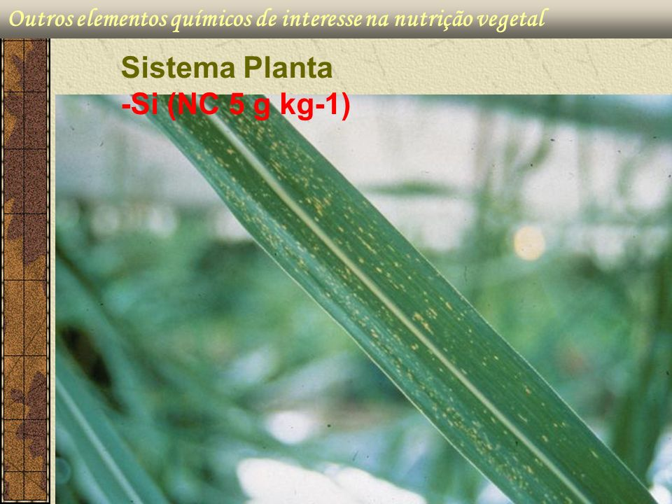 Sistema Planta -Si (NC 5 g kg-1)