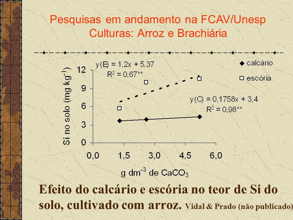 Pesquisas em andamento na FCAV/Unesp