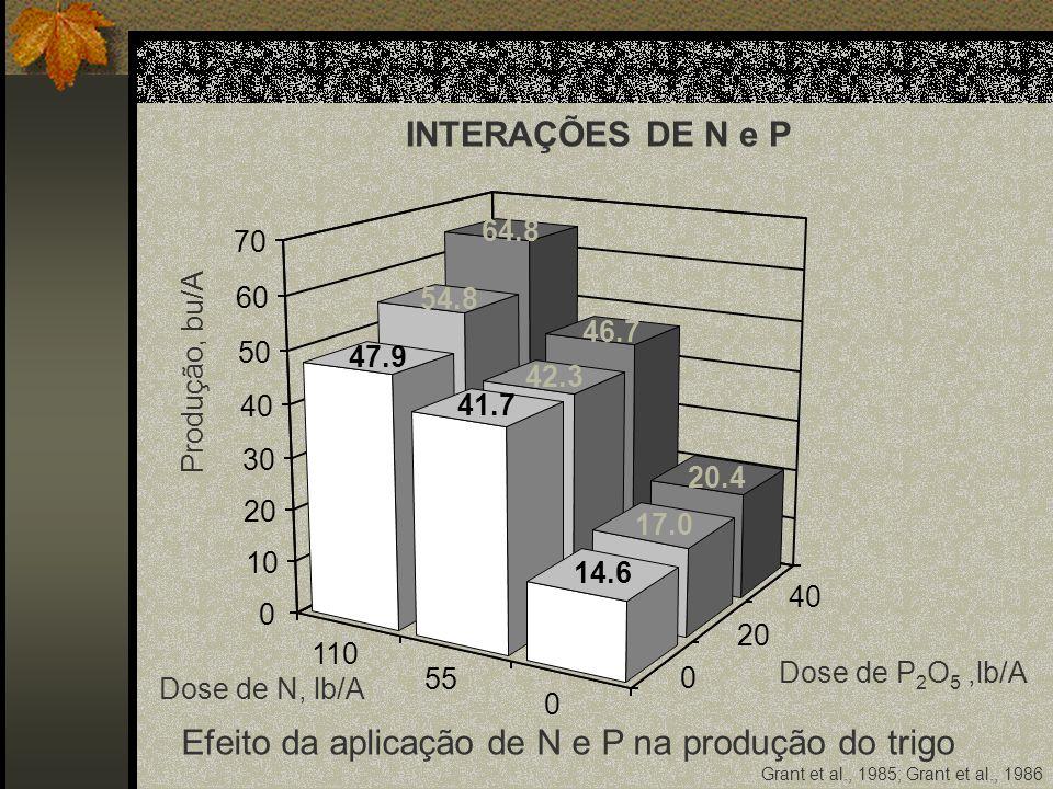 Efeito da aplicação de N e P na produção do trigo