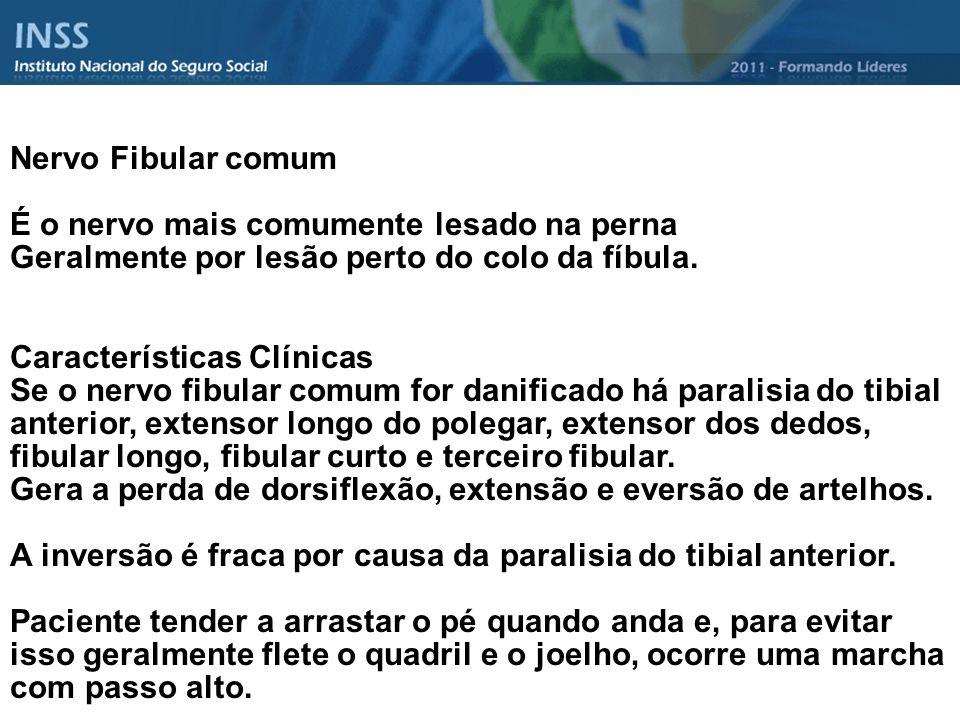 Nervo Fibular comum É o nervo mais comumente lesado na perna. Geralmente por lesão perto do colo da fíbula.
