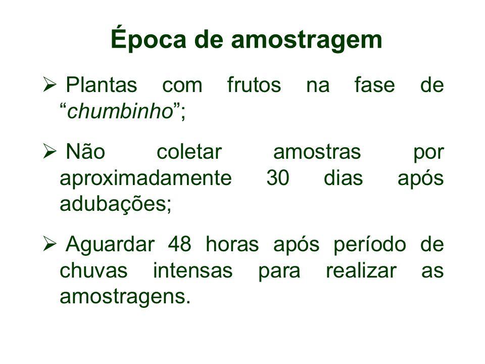 Época de amostragem Plantas com frutos na fase de chumbinho ;