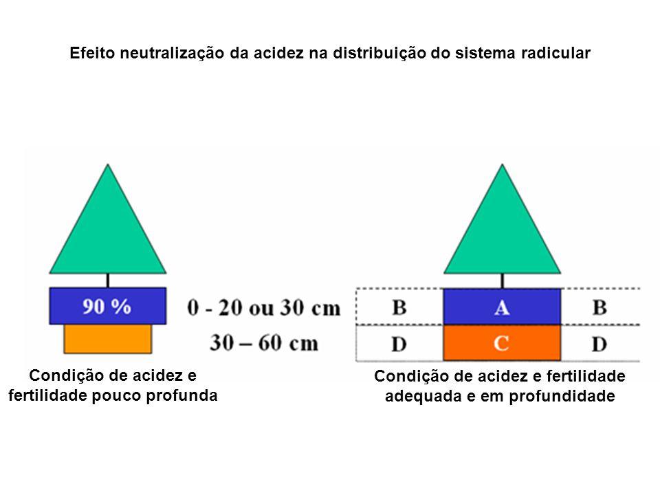Efeito neutralização da acidez na distribuição do sistema radicular