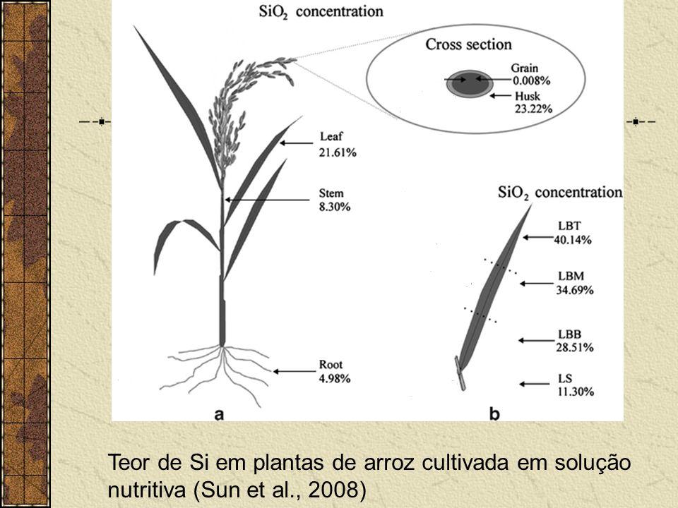 Teor de Si em plantas de arroz cultivada em solução nutritiva (Sun et al., 2008)