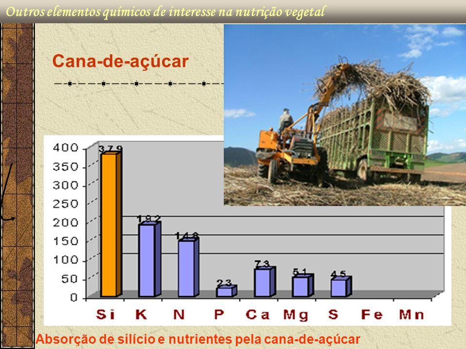 Outros elementos químicos de interesse na nutrição vegetal