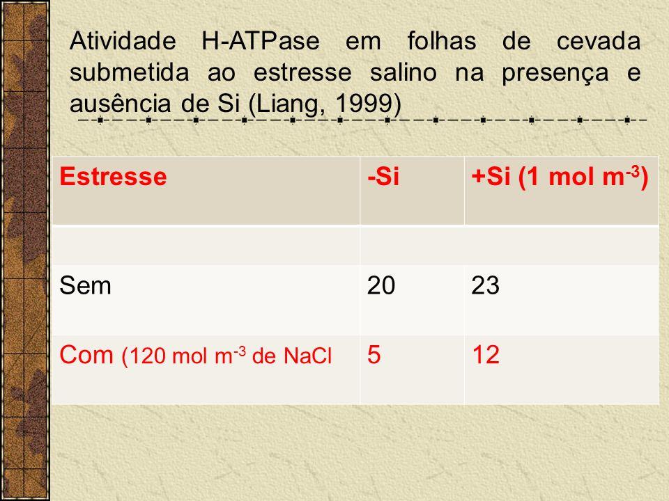 Atividade H-ATPase em folhas de cevada submetida ao estresse salino na presença e ausência de Si (Liang, 1999)