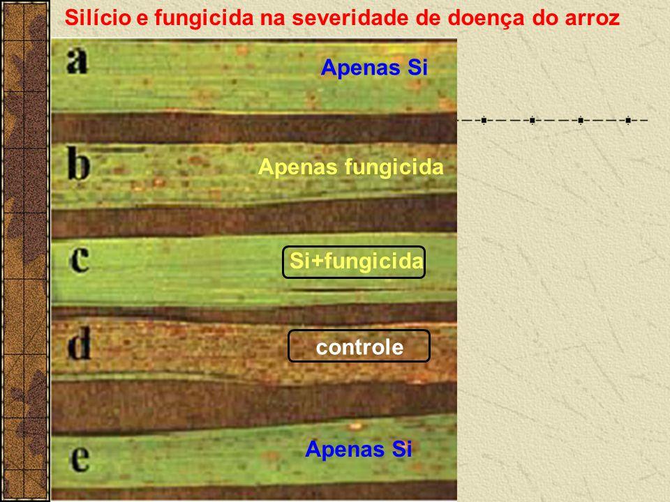 Silício e fungicida na severidade de doença do arroz