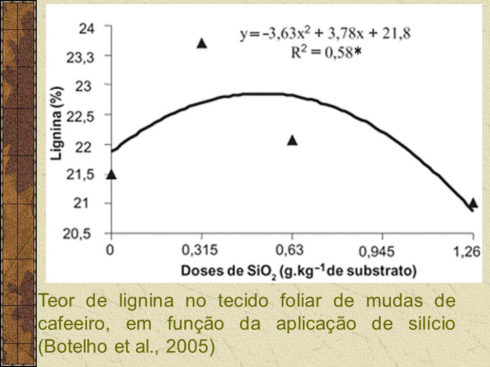 Teor de lignina no tecido foliar de mudas de cafeeiro, em função da aplicação de silício (Botelho et al., 2005)