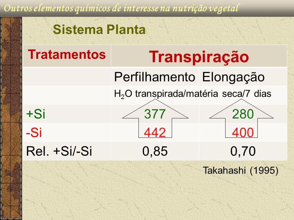 Transpiração Sistema Planta Tratamentos Perfilhamento Elongação +Si