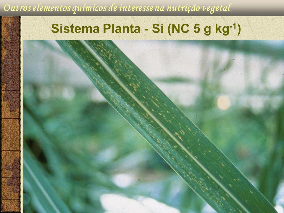 Sistema Planta - Si (NC 5 g kg-1)