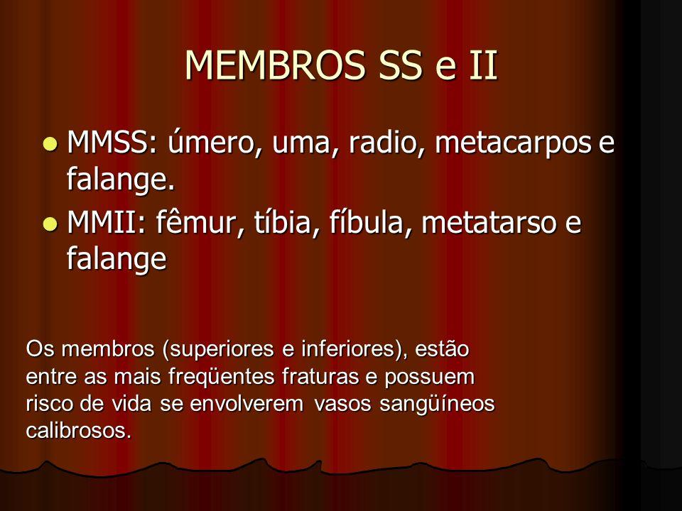 MEMBROS SS e II MMSS: úmero, uma, radio, metacarpos e falange.