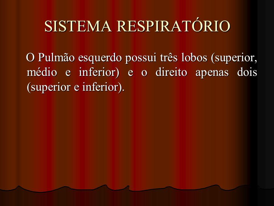SISTEMA RESPIRATÓRIO O Pulmão esquerdo possui três lobos (superior, médio e inferior) e o direito apenas dois (superior e inferior).