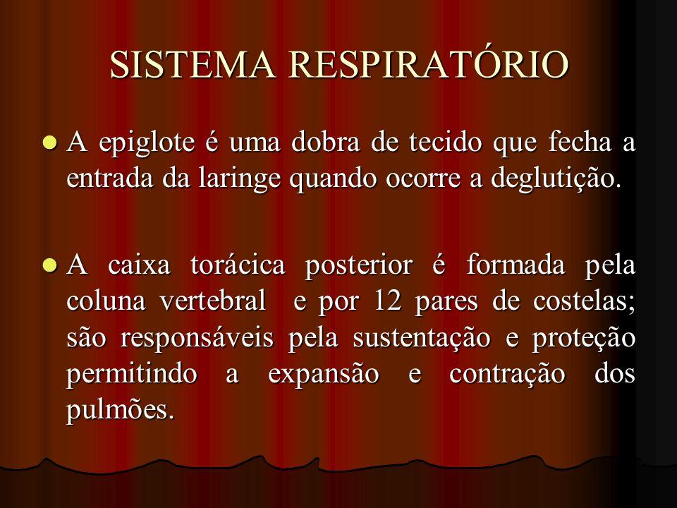 SISTEMA RESPIRATÓRIO A epiglote é uma dobra de tecido que fecha a entrada da laringe quando ocorre a deglutição.