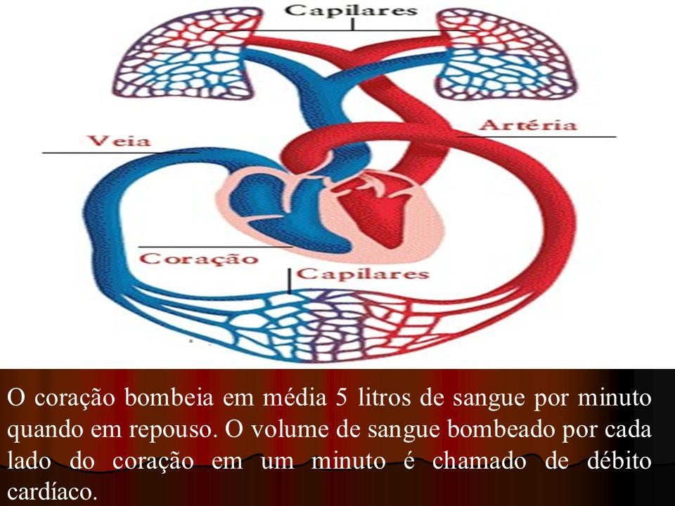 O coração bombeia em média 5 litros de sangue por minuto quando em repouso.