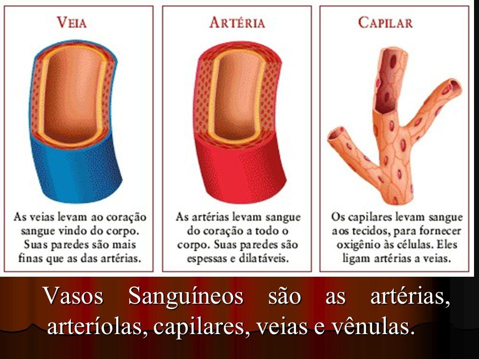 Vasos Sanguíneos são as artérias, arteríolas, capilares, veias e vênulas.