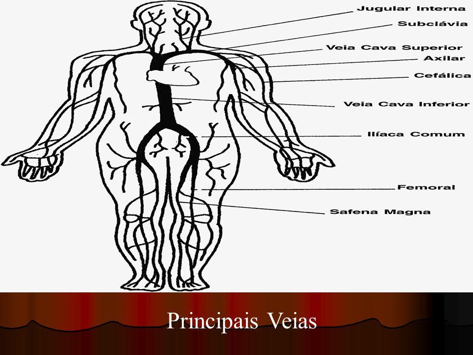 Principais Veias