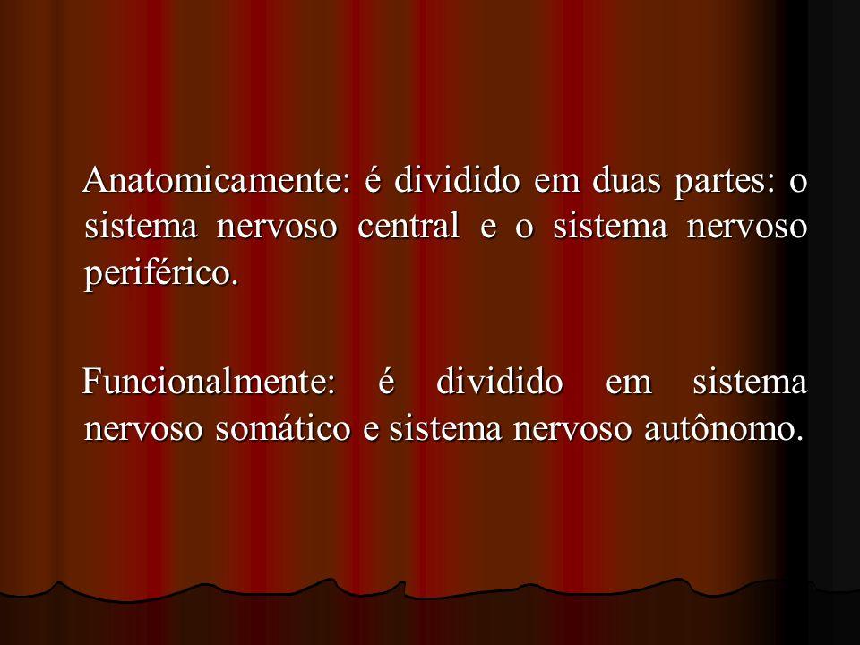 Anatomicamente: é dividido em duas partes: o sistema nervoso central e o sistema nervoso periférico.