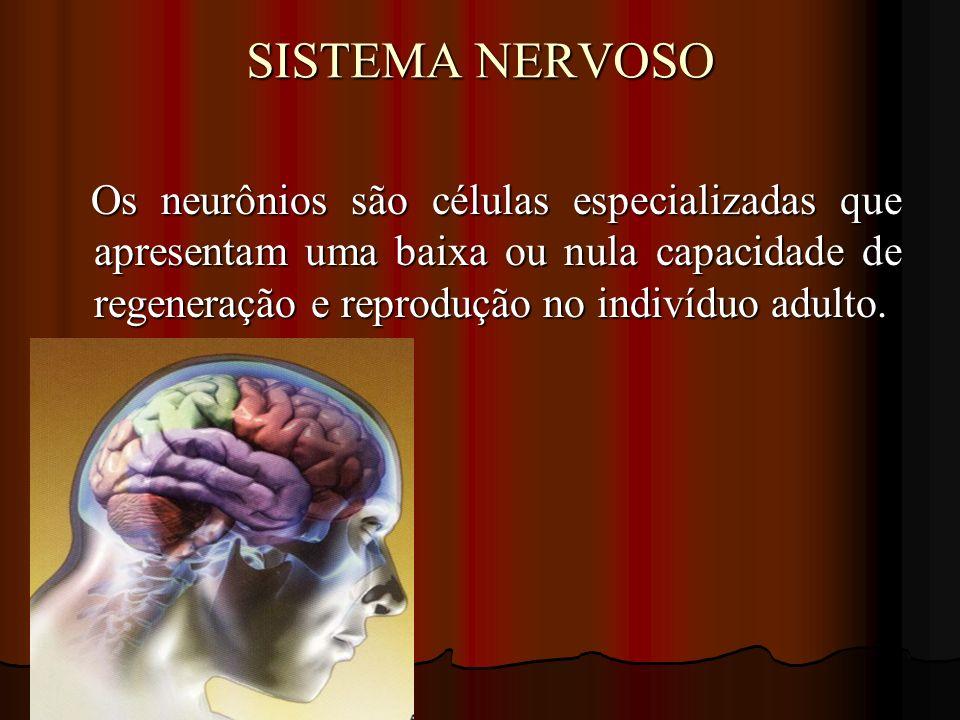 SISTEMA NERVOSO Os neurônios são células especializadas que apresentam uma baixa ou nula capacidade de regeneração e reprodução no indivíduo adulto.