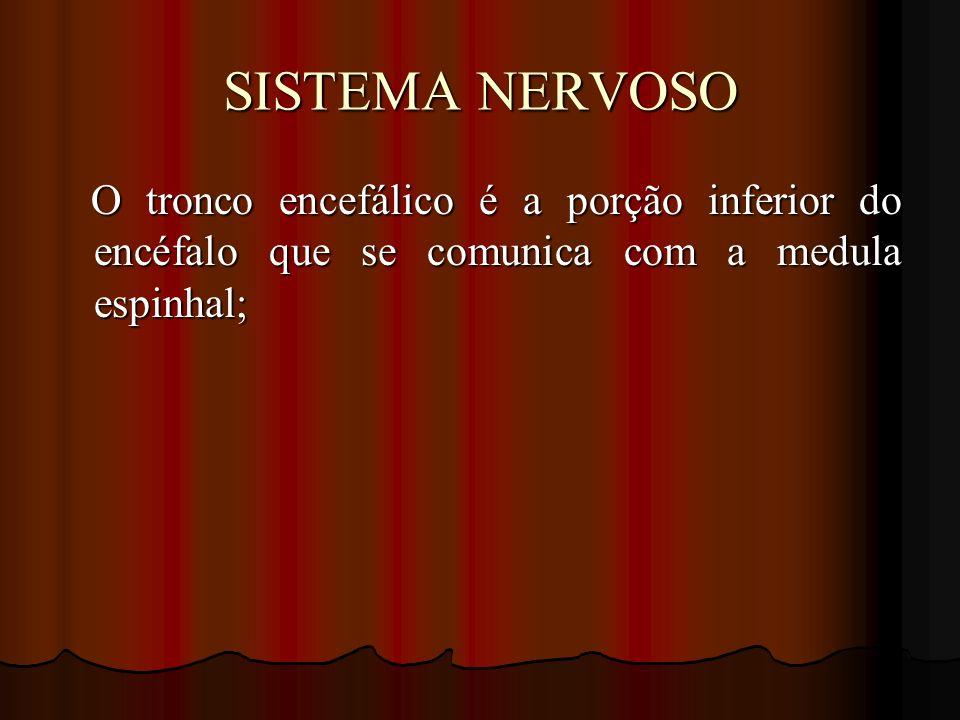 SISTEMA NERVOSO O tronco encefálico é a porção inferior do encéfalo que se comunica com a medula espinhal;