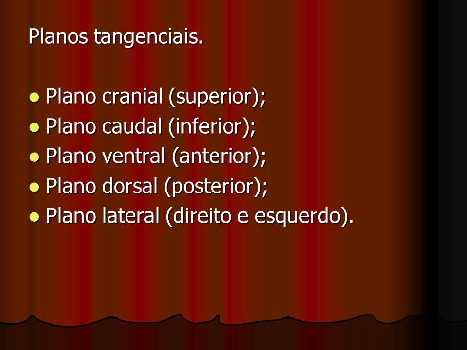 Planos tangenciais. Plano cranial (superior); Plano caudal (inferior); Plano ventral (anterior); Plano dorsal (posterior);