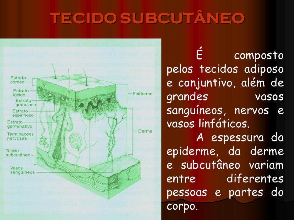 TECIDO SUBCUTÂNEO É composto pelos tecidos adiposo e conjuntivo, além de grandes vasos sanguíneos, nervos e vasos linfáticos.