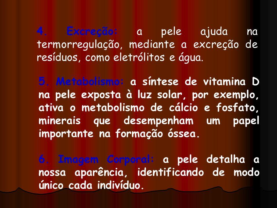 4. Excreção: a pele ajuda na termorregulação, mediante a excreção de resíduos, como eletrólitos e água.