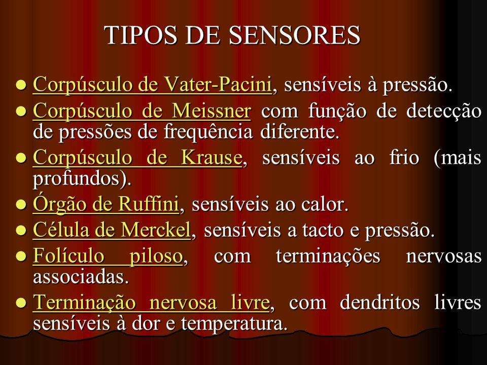 Corpúsculo de Vater-Pacini, sensíveis à pressão.