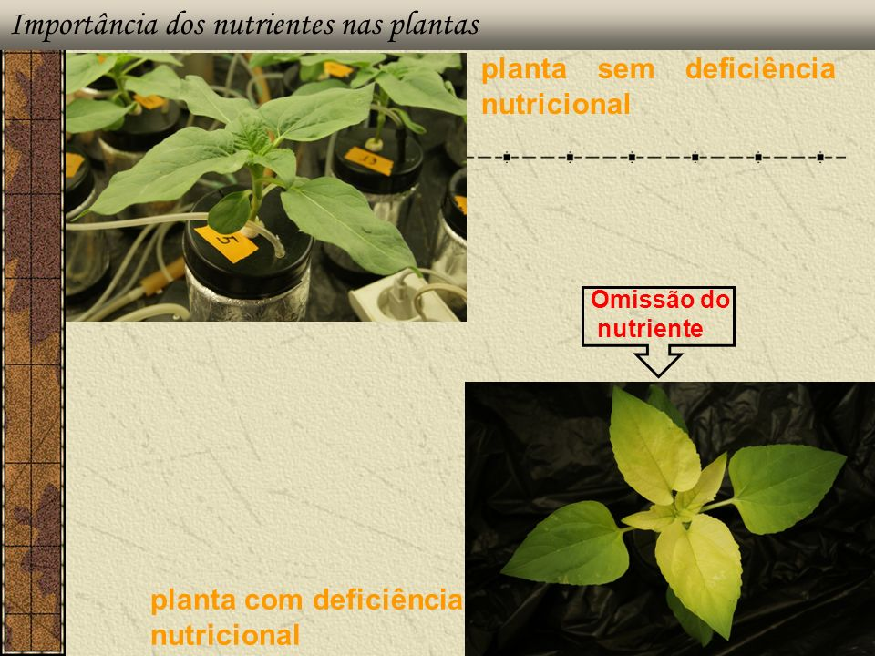 Importância dos nutrientes nas plantas