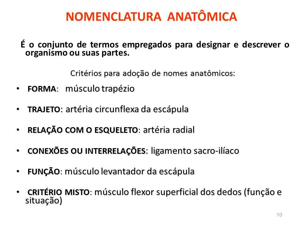 NOMENCLATURA ANATÔMICA