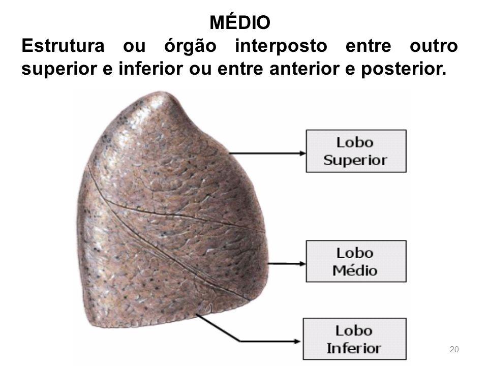 MÉDIO Estrutura ou órgão interposto entre outro superior e inferior ou entre anterior e posterior.