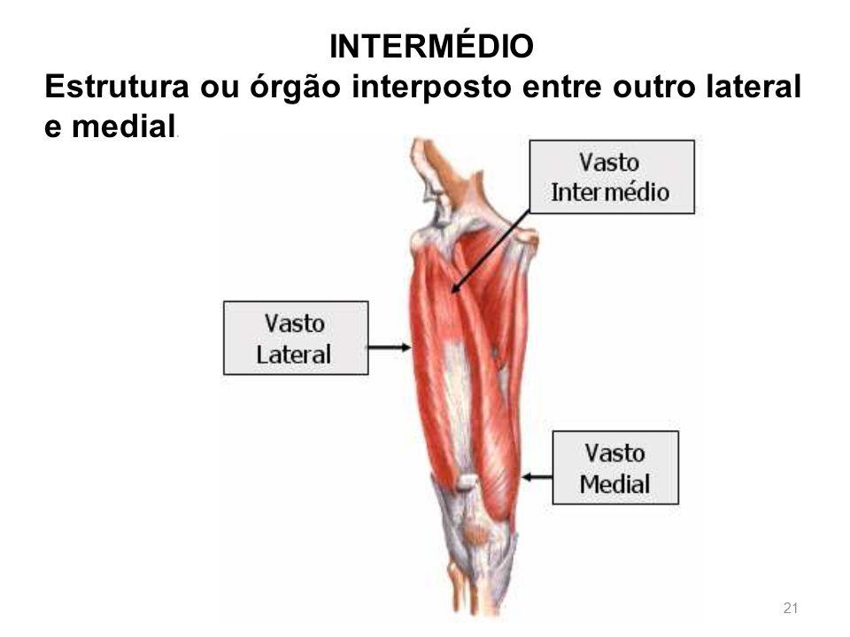 INTERMÉDIO Estrutura ou órgão interposto entre outro lateral e medial.