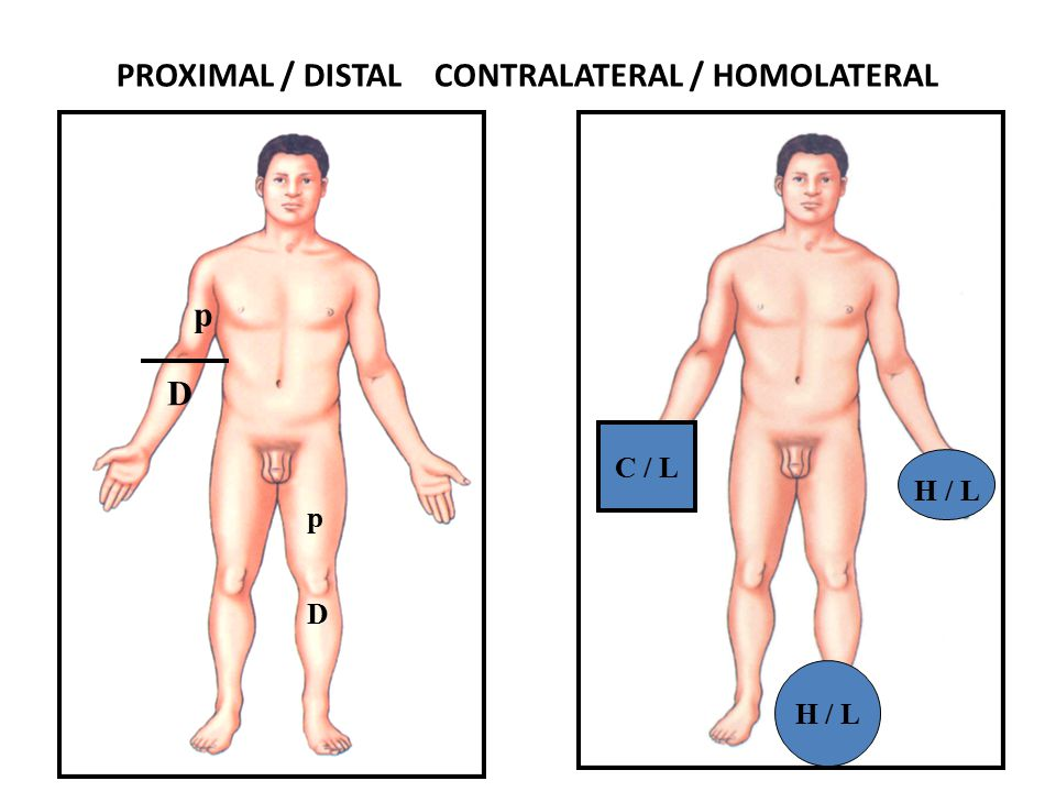 PROXIMAL / DISTAL CONTRALATERAL / HOMOLATERAL