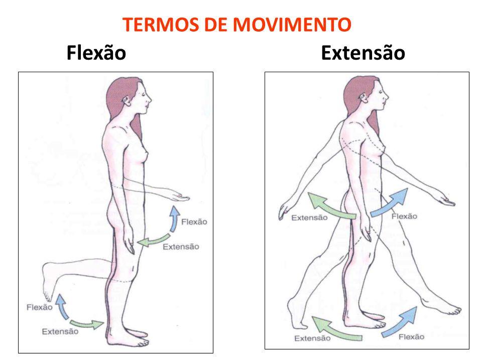 TERMOS DE MOVIMENTO Flexão Extensão