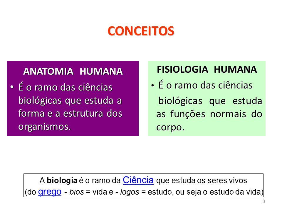CONCEITOS FISIOLOGIA HUMANA ANATOMIA HUMANA