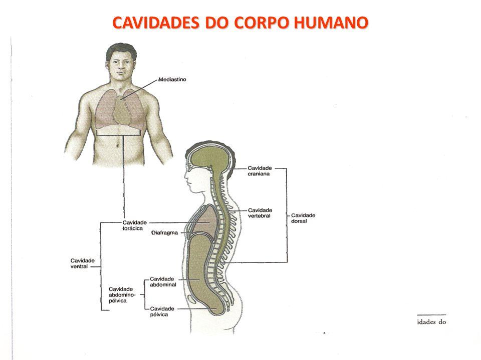 CAVIDADES DO CORPO HUMANO